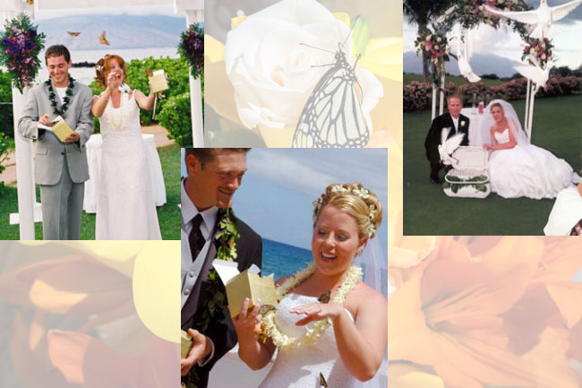 destination wedding putting the final touches on your ceremony shouldnt stress you out why not release white doves or monarch butterflies into the